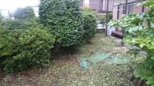 草刈りむしり4