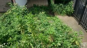 草刈りむしり5